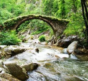 Δάσος Φρακτού