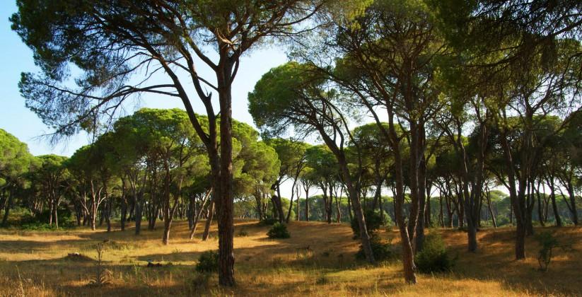 Δάσος Στροφιλιάς